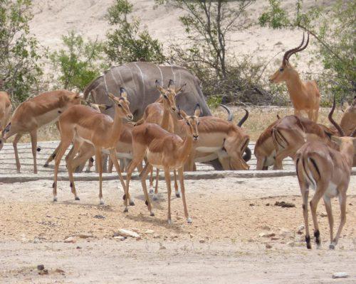 Tiere im Krüger National Park