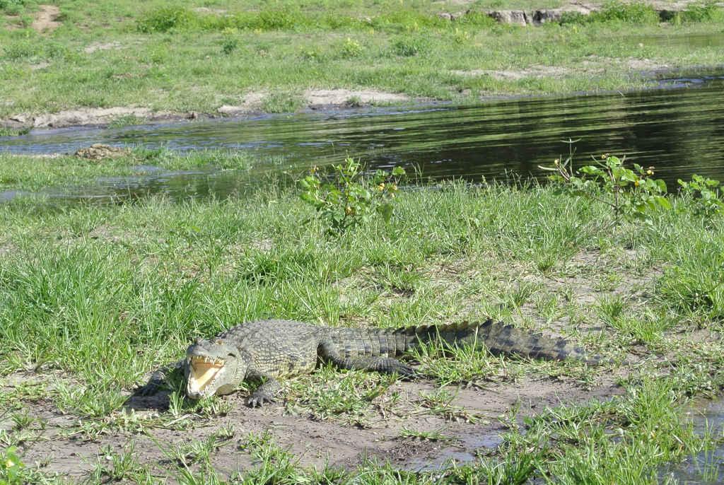 Krokodile begrüßten uns auch