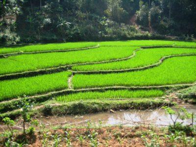 Südostasien Reise - MaiChau_Reisfelder