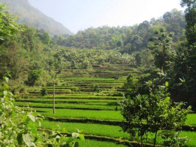 Südostasien Reise - MaiChau_Reisfelder2