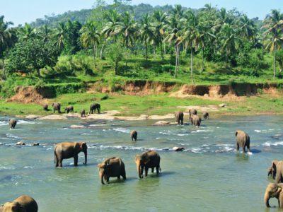 Südostasien Reise - SriLanka3