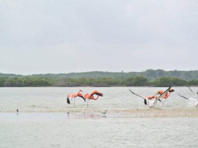 MSWellTravel_Yucatan_Flamingo