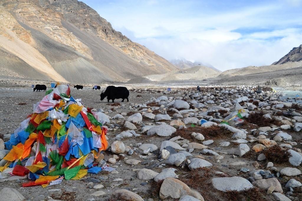 Yaks am Mount Everest Base Camp