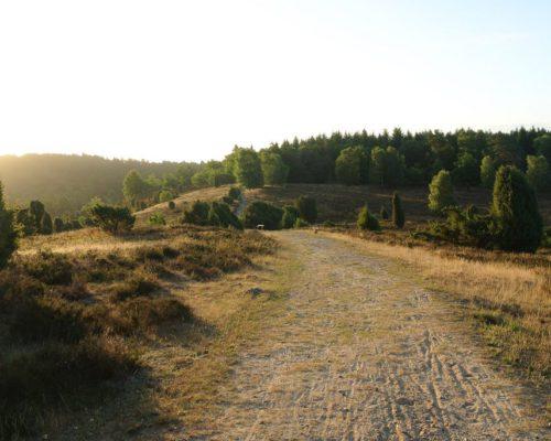 Rückweg Lüneburger Heide - Ort Totengrund