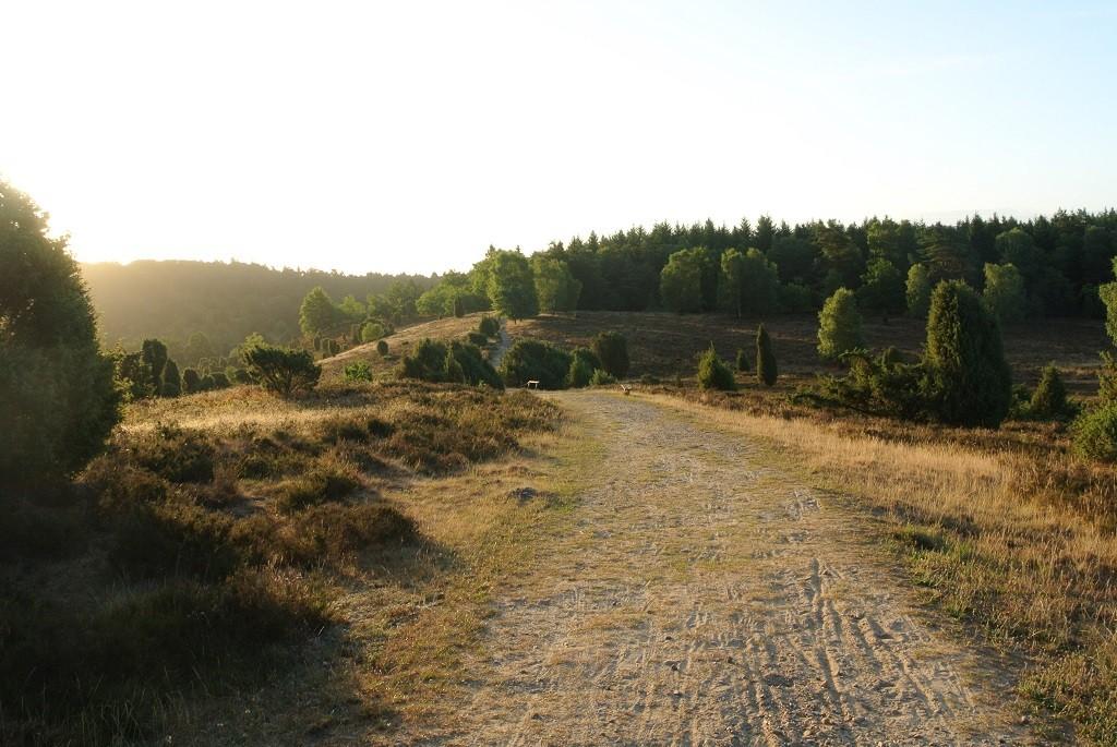 Weg in der Heide