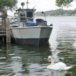 Boote und Schwäne