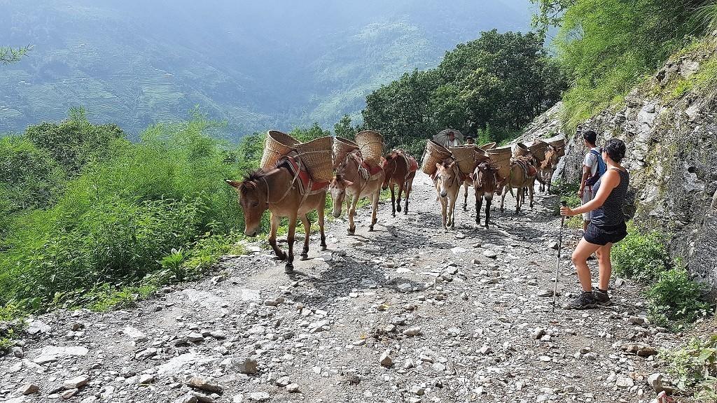 Esel beim Abstieg
