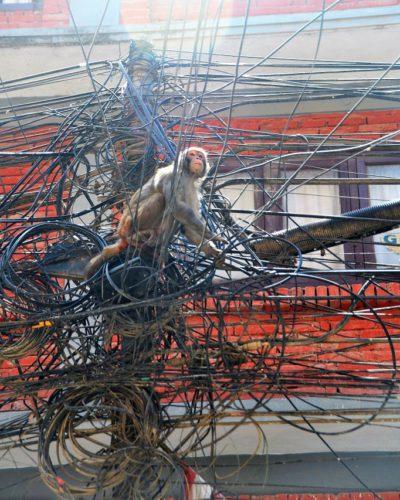 Affe im Strommast ist keine Seltenheit