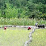 Arbeiter beim Reisanbau