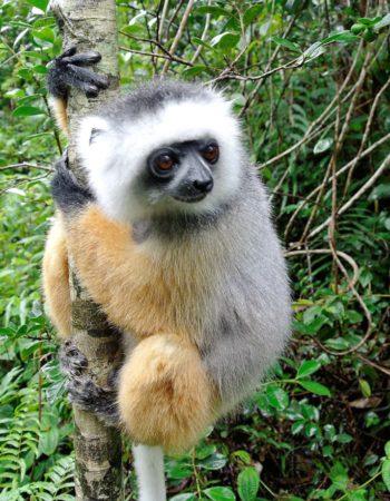 Lemur Island in Andasibe