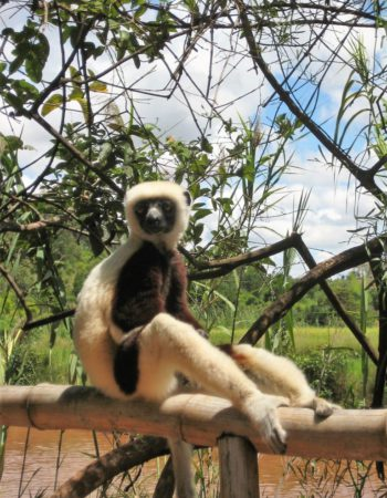 Lemuren Park
