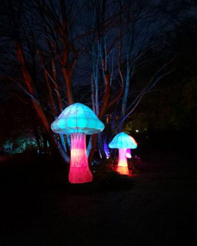Dicht- und Lichtwesen