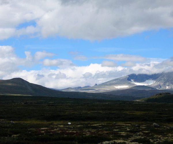Wandergebiet zu den Moschusochsen im Dovrefjell