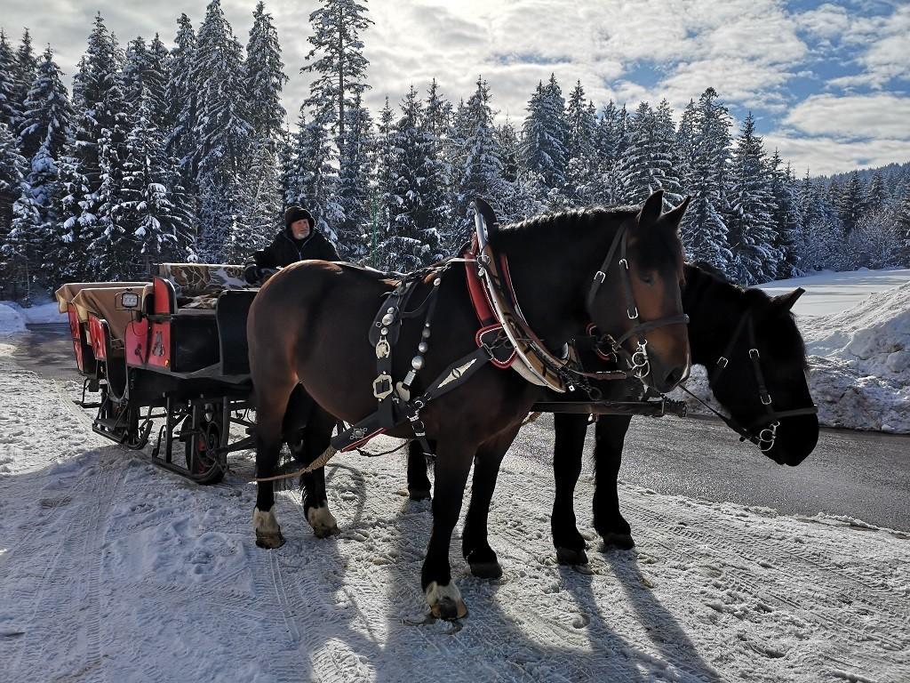 Pferdeschlittenfahrt, Penningberg