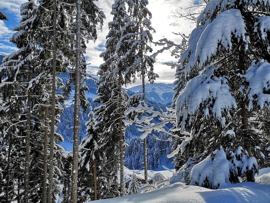 Durch den schneebedeckten Wald!