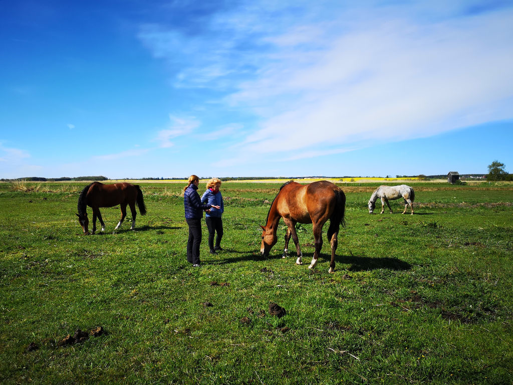 Pferdegestütztes Coaching in Sauzin