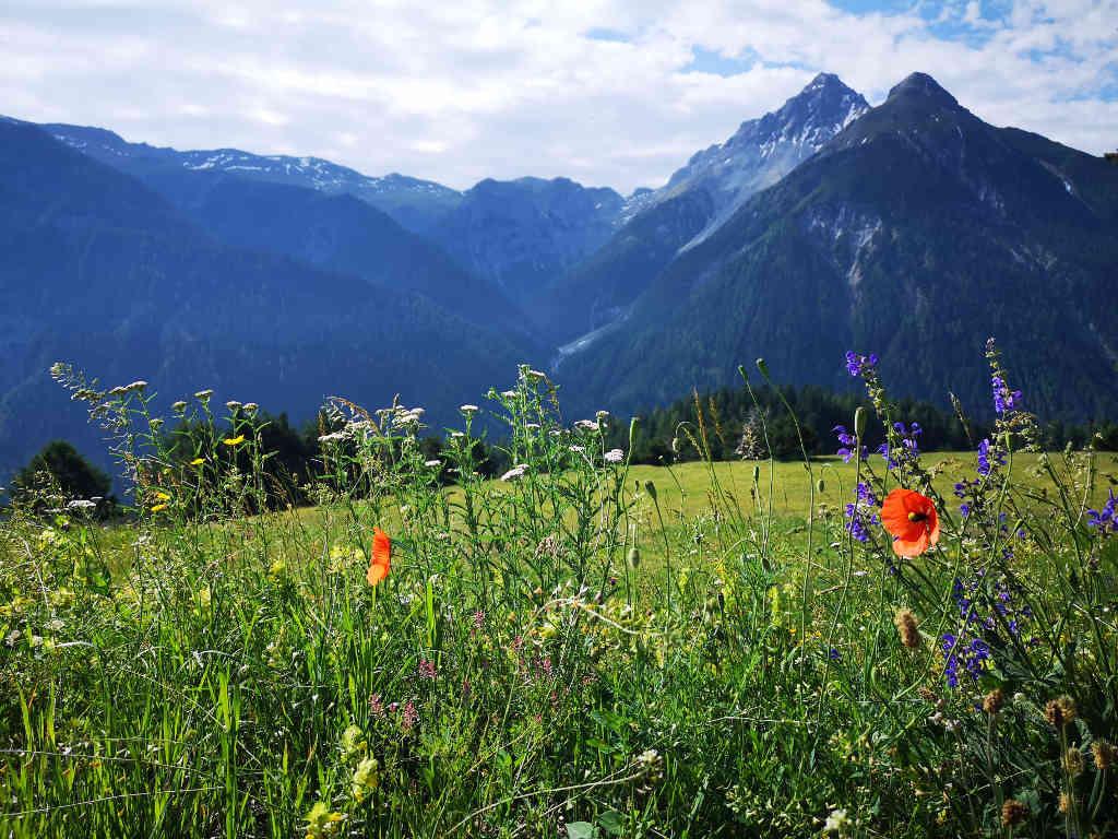 Blumenwiese mit Bergkulisse