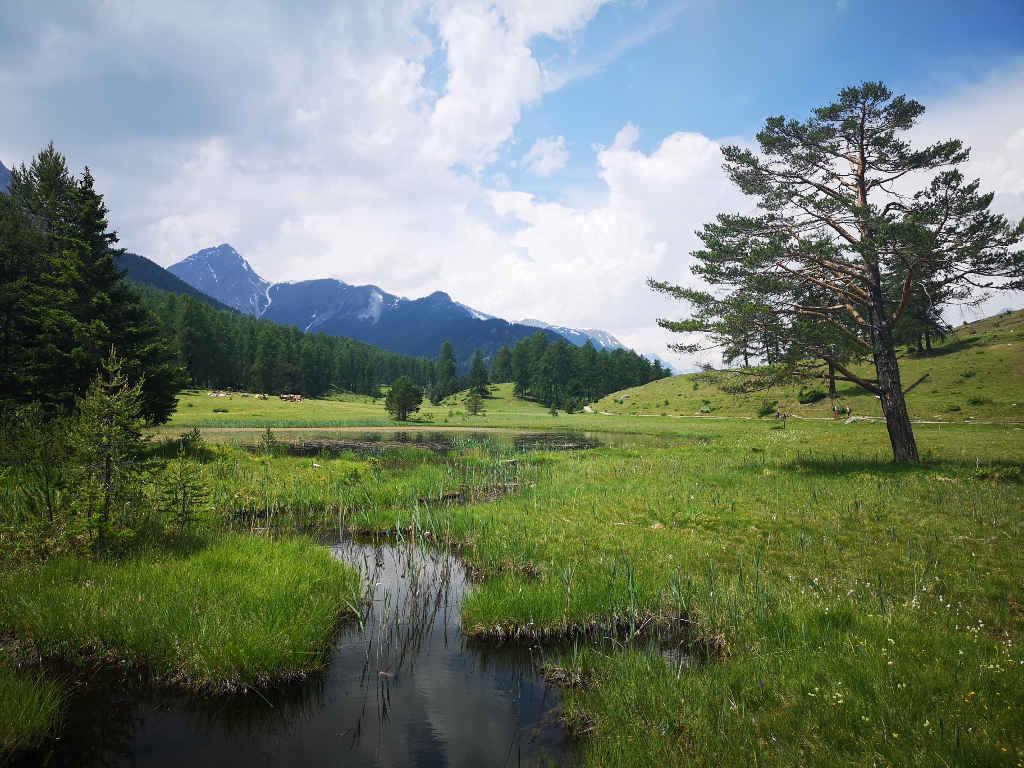Tolle Natur auf der Wildkräuterwanderung