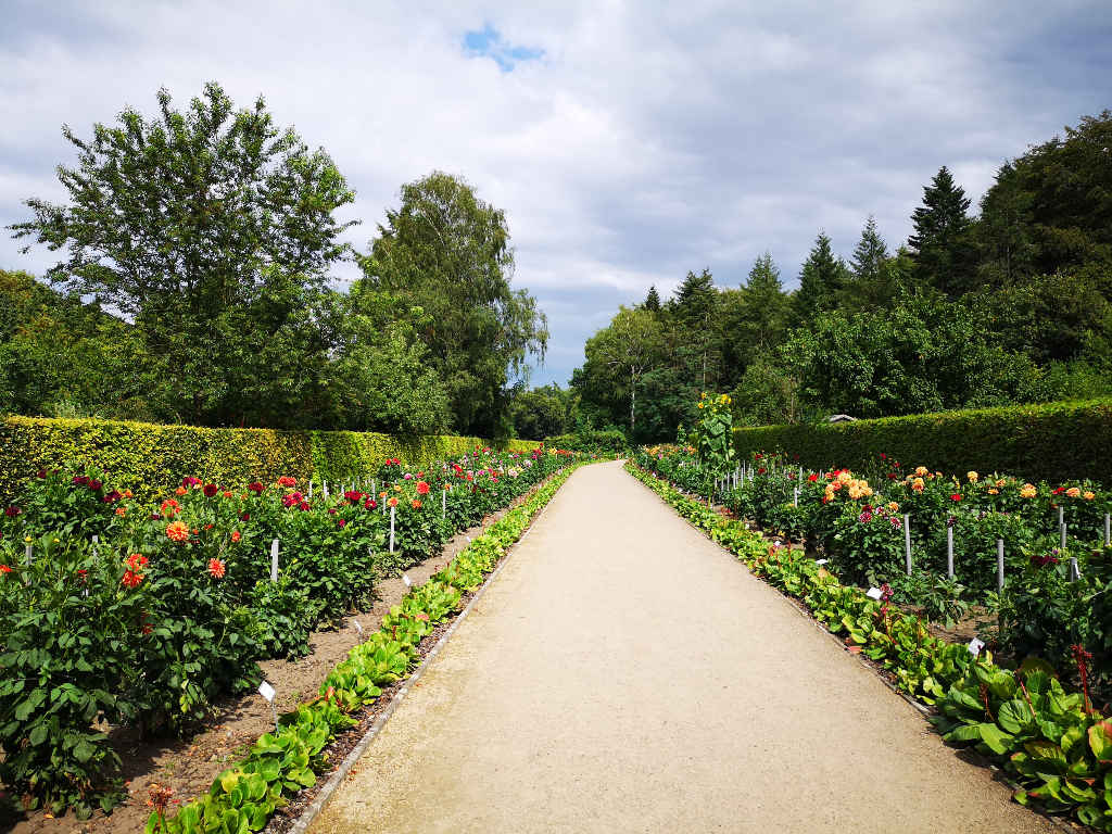 Spaziergang im Dahliengarten