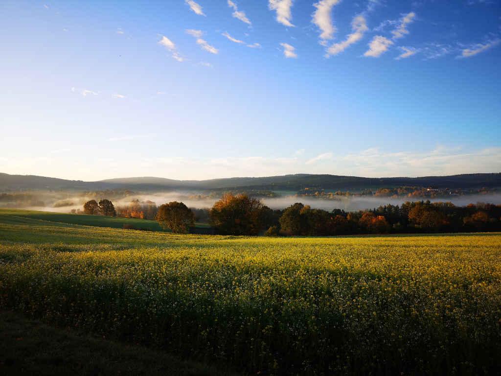 Blühende Wiesen in der Oberpfalz