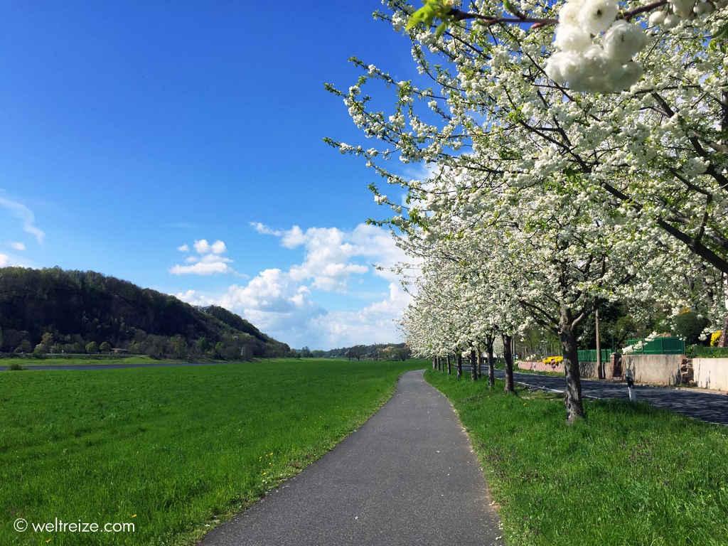 Idyllische Natur von Dresden nach Riesa ©Weltreize