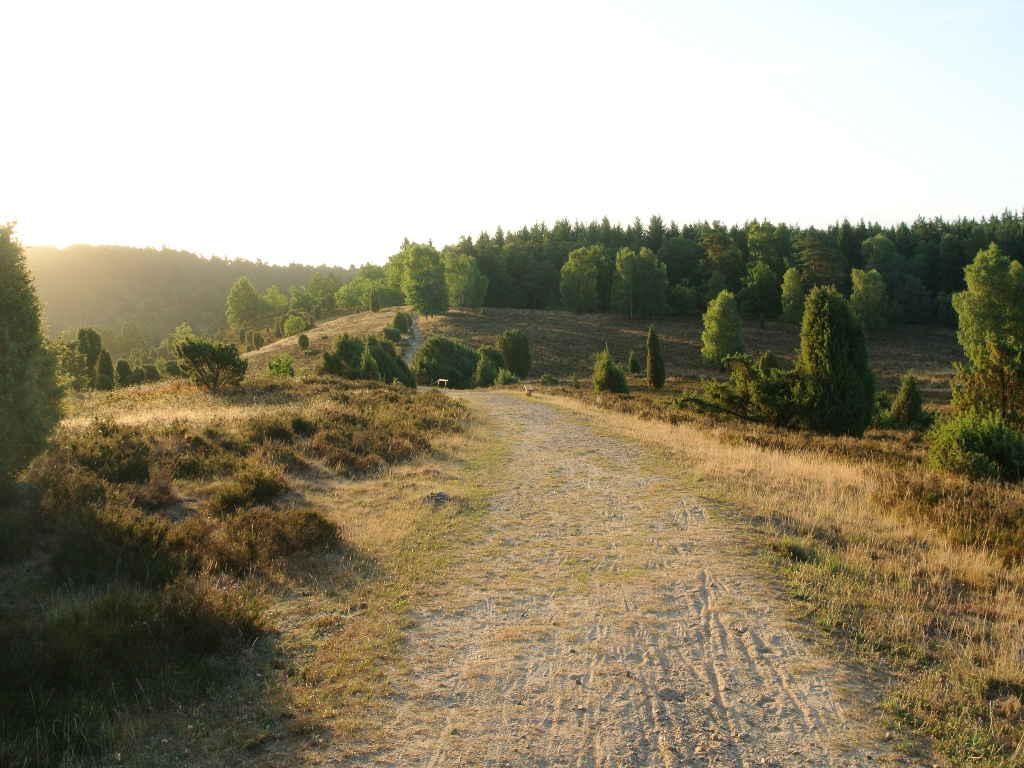 Waldbaden in der Lüneburger Heide