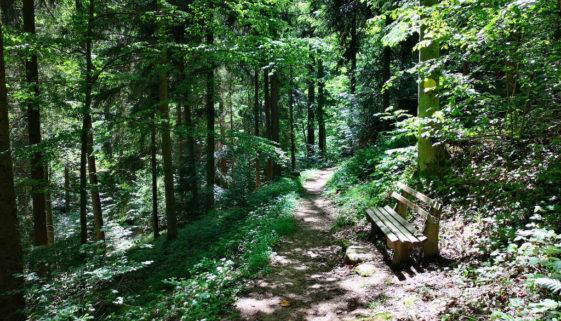 Waldbaden aus Japan im Schwarzwald