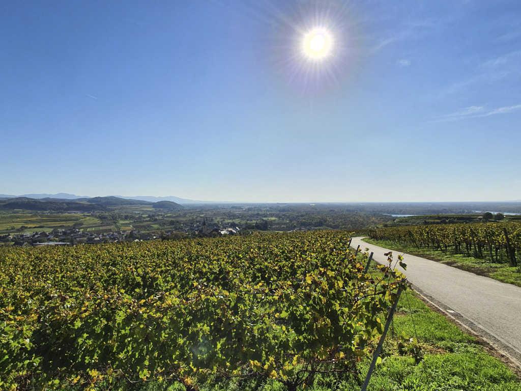 Breisgau am Kaiserstuhl ©Gabriela auf Reisen