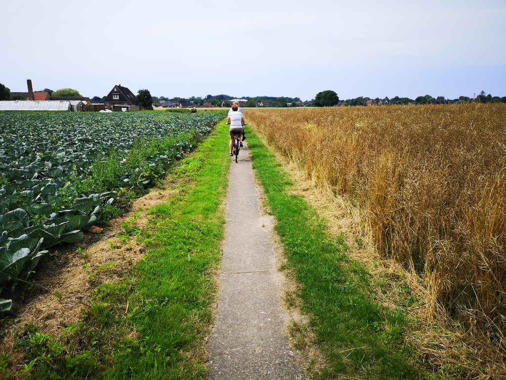 Mit dem Rad vorbei an Gemüse