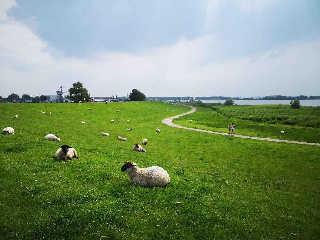 Radtour vorbei an Schafen