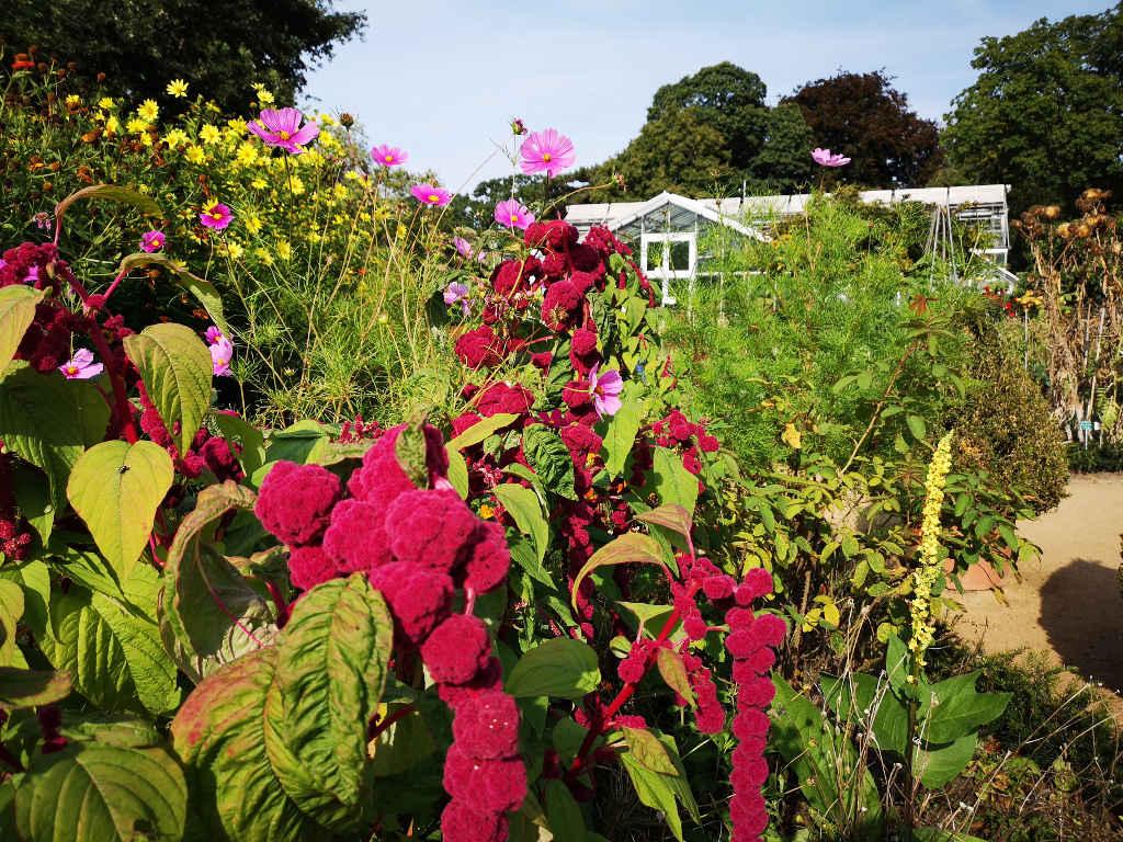 4000 Pflanzenarten im Botanischen Garten