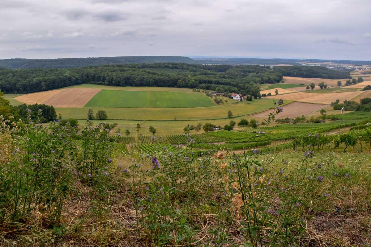Landschaft Weinanbaugebiet Kraichgau ©Travelsanne